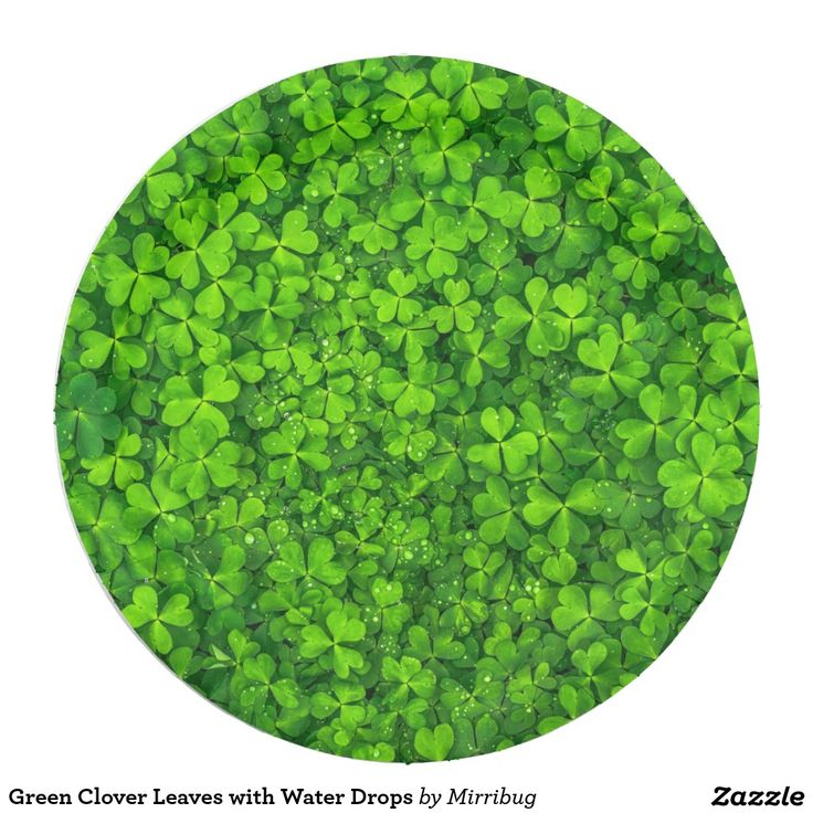 Green Clover Leaves with Water Drops Paper Plate  sc 1 st  Pinterest & 158 best zazzle paper plates images on Pinterest | Paper plates ...