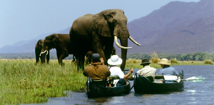 Zambezi Canoe Safari, doesn't get much better than this!