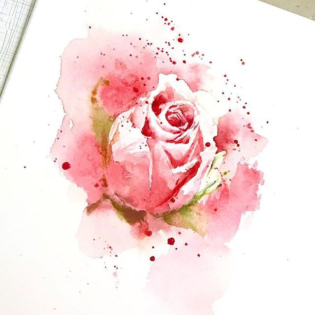 Sketches Rose Roseart Painting Akvarel Watercolor Art