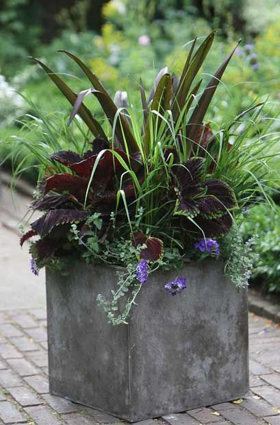 """Arabella Lennox-Boyd, garden designer  """"This planter is designed to get better and better. The luxuriant coleus Kong Series 'Red' is dominant from the start, but the Panicum virgatum 'Rotstrahlbusch' becomesredder, the Eucomis 'Sparkling Burgundy' flowers in August and the Verbena 'Blue Lagoon' and Helichrysum microphyllum fill out all season, rising to anautumn crescendo."""", container gardening, landscaping"""