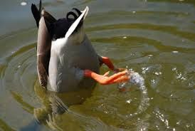 Image result for duck feet