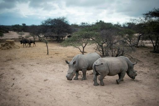 July 24 2017 at 12:47PM Rhino poaching dips slightly in South Africa https://phys.org/news/2017-07-rhino-poaching-dips-slightly-south.html  [PhysOrg]