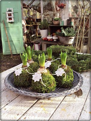 Maybe I'll try this with one of the hyacinth bulbs I'll force into bloom in January