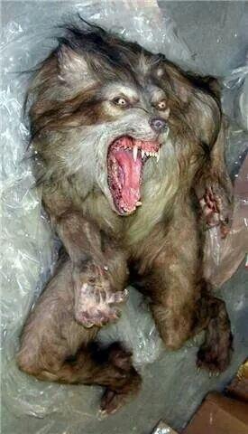 Werewolf...wow! Very realistic