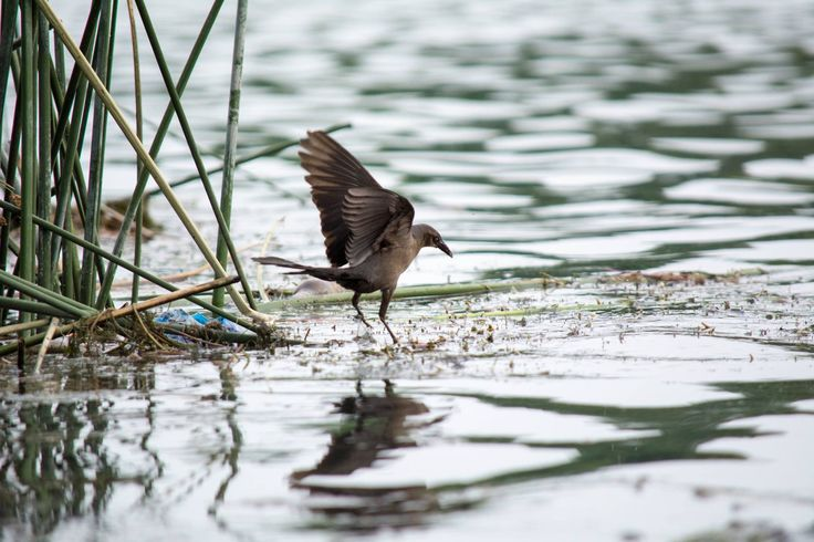 Moulting bird  #photofraphy #birds #fujifilmxt2