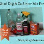 How to get rid of dog and cat urine odors the all natural way