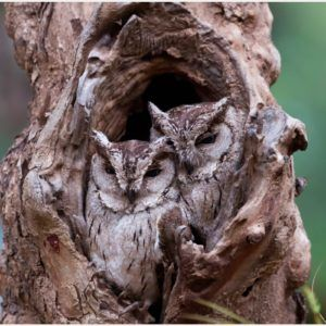 Owl Camouflage HD Wallpaper | owl camouflage hd wallpaper 1080p, owl camouflage hd wallpaper desktop, owl camouflage hd wallpaper hd, owl camouflage hd wallpaper iphone