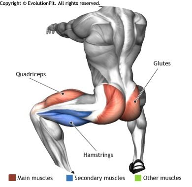 GLUTES - Clínica de Artrosis y Osteoporosis www.clinicaartrosis.com PBX: 6836020 en Bogotá - Colombia.