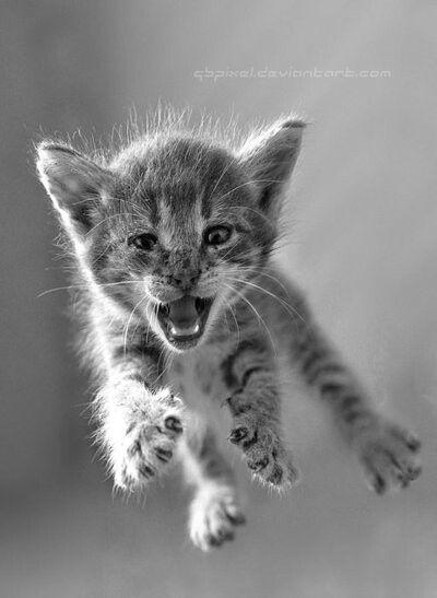 Crazy cat flying>