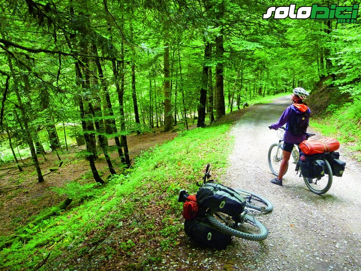 Amazing beech forest! - Selva de Irati