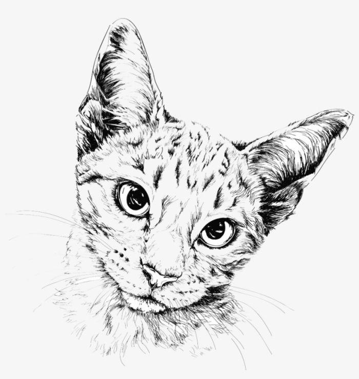 1001 Ideen Und Inspirationen Fur Schone Bilder Zum Nachmalen Katzen Illustration Katzen Kunst Kunst Inspiration