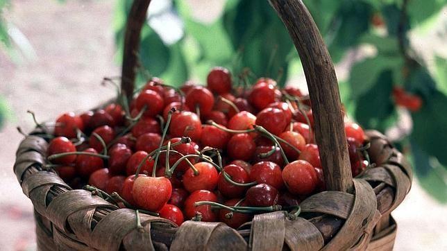 Las cerezas del Jerte son una joya gastronómica. Las picotas son la variedad más esperada.En Atable.es le dedicamos uno de nuestros artículos.