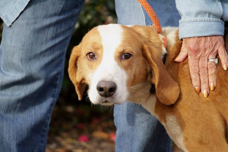 Windsor Va M Redtick Mix Named Lucky Isle Of Wight County Animal Shelter Congrats