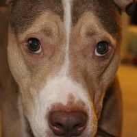 #dogalize I cani riconoscono i torti subiti? Scopriamolo insieme! #dogs #cats #pets