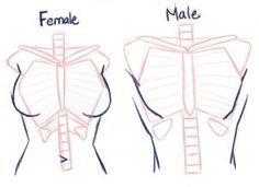 how to draw anime anatomy step 3