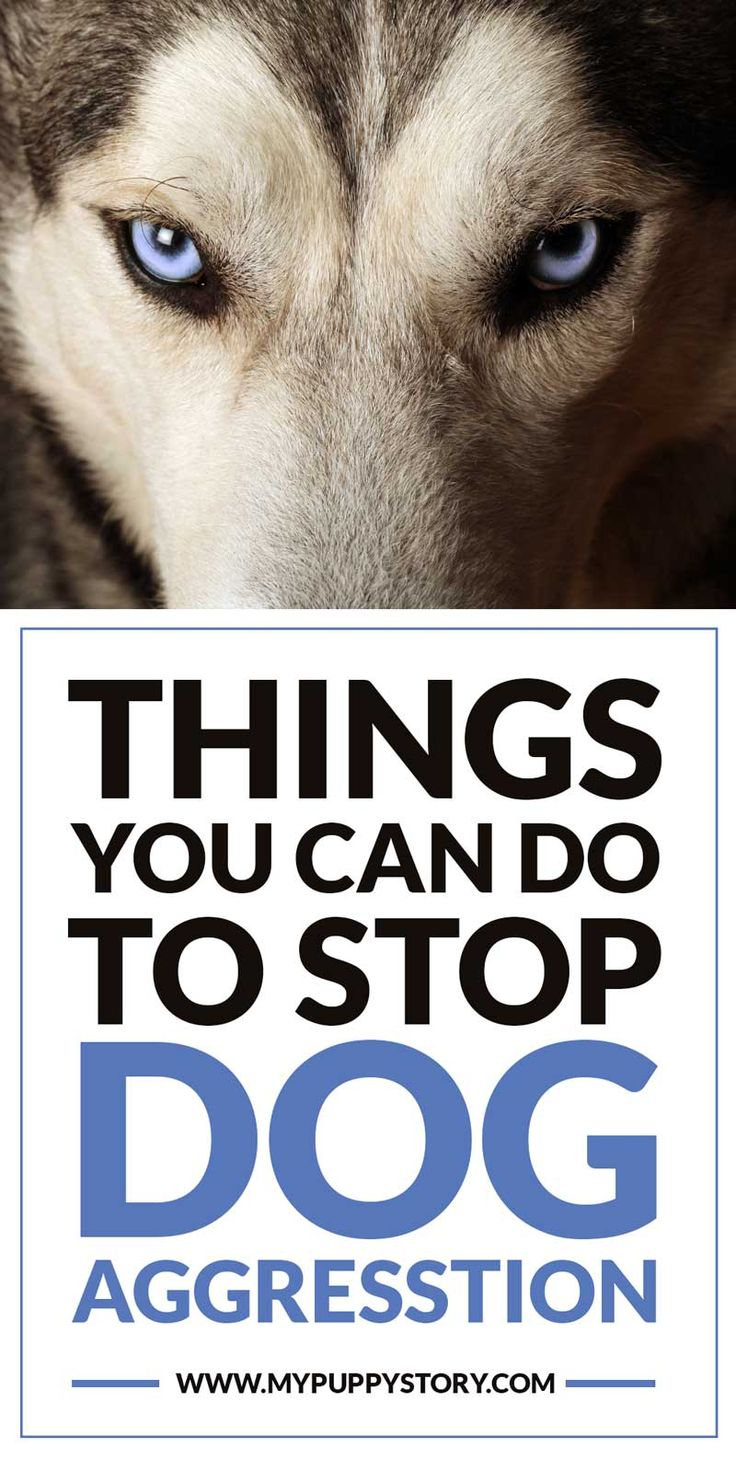 how to stop puppy aggression