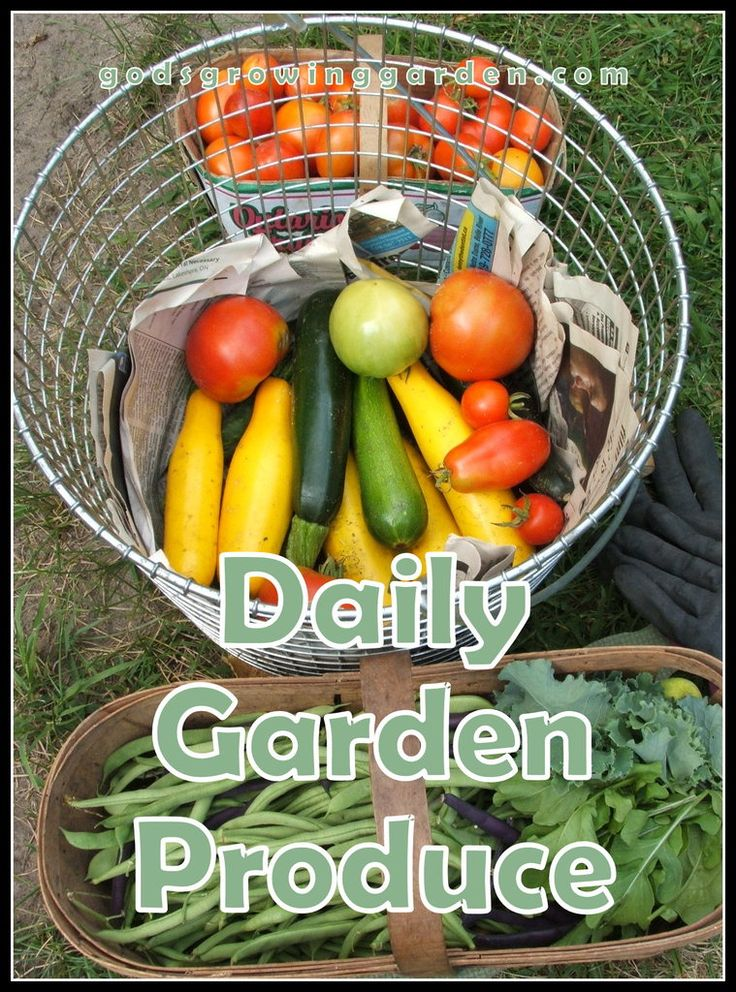 Daily #garden produce with #recipes - by: http://www.godsgrowinggarden.com/2017/08/daily-garden-produce-with-recipes.html