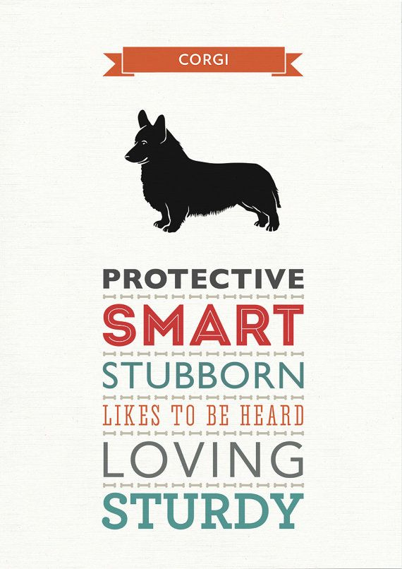 corgi breed traits print.
