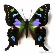 Tropical Rainforest Butterflies - Bing Images