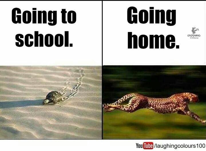 Funny Meme Quotes About School : Pin by bhavik gorsawala on laugh it out pinterest