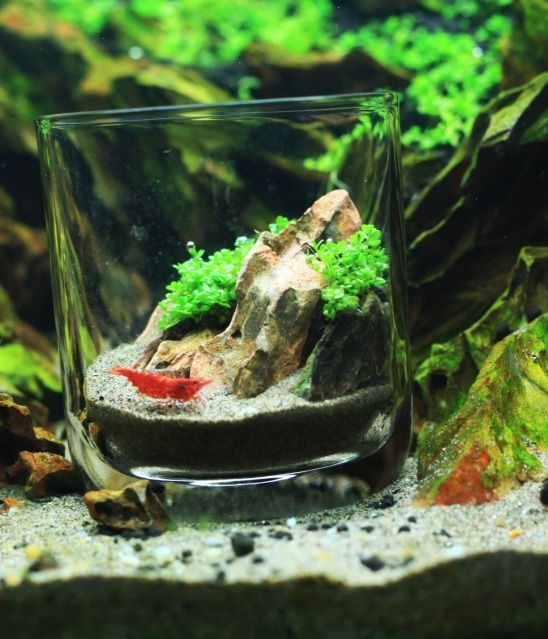 pico aquascape Aquascaping Pinterest