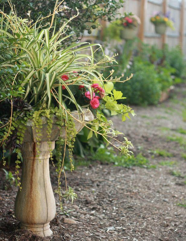 flores del sol: bird bath planter