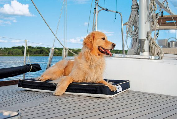 For the boating dog - I have one!