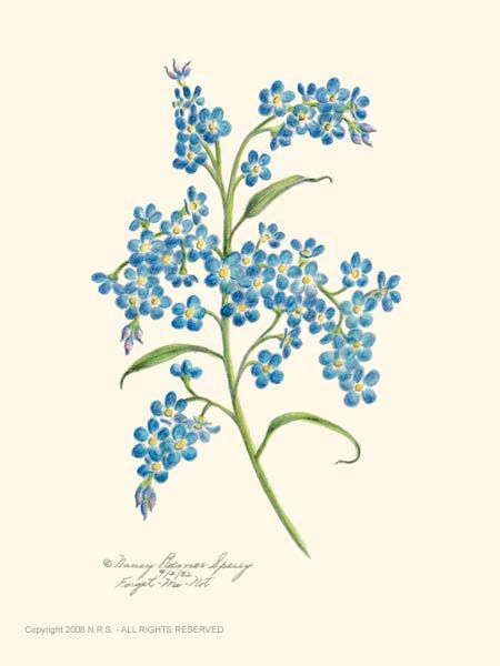125 best forget me not images on pinterest forget me gallery for forget me nots drawing ccuart Image collections