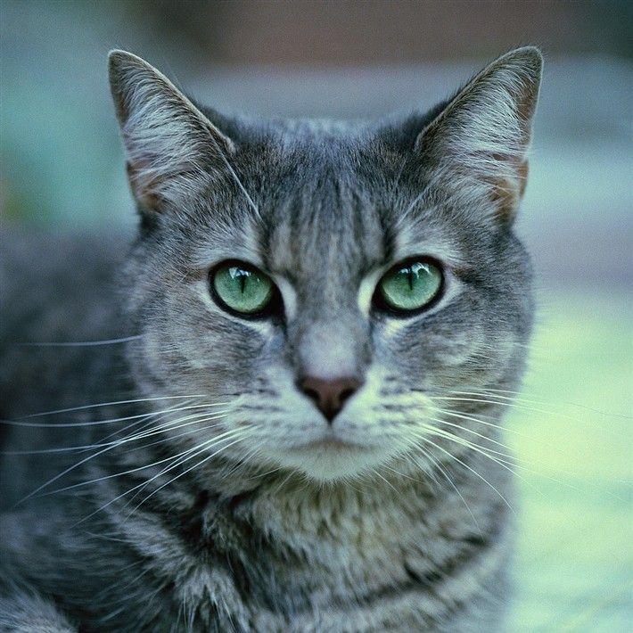 Epingle Par Moonstone Sur Purrrfect Cats Animaux Chat Fond D Ecran Dessin