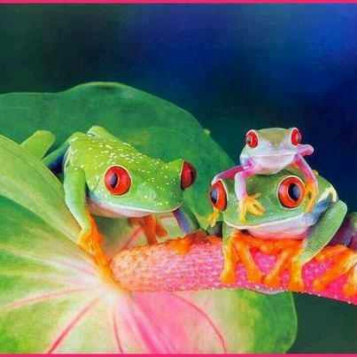 Frogs:   Me & my parents.  Reminds me of the world being well