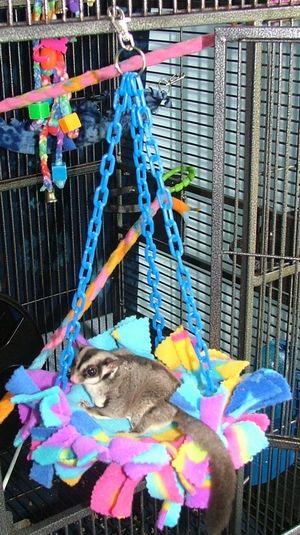 Rockport Roost - make your own bird and sugar glider toys - No Sew Accessories - Suz' Sugar Gliders