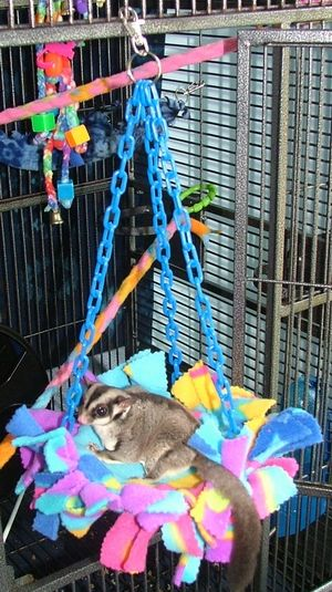 Make your own sugar glider and/or ferret toys - No Sew Accessories