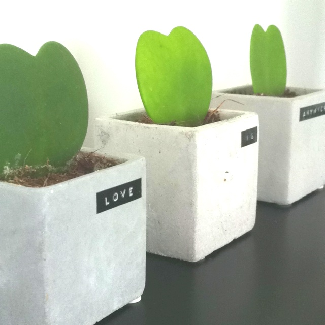 Concrete squared pot - heart grass plant #dymo #love #concrete #grey #heart