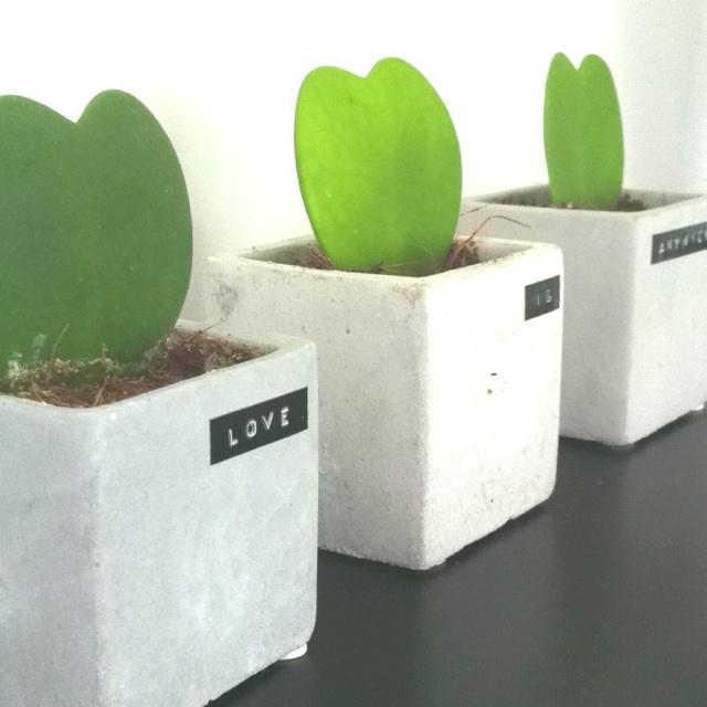 Concrete squared pot - heart grass plant