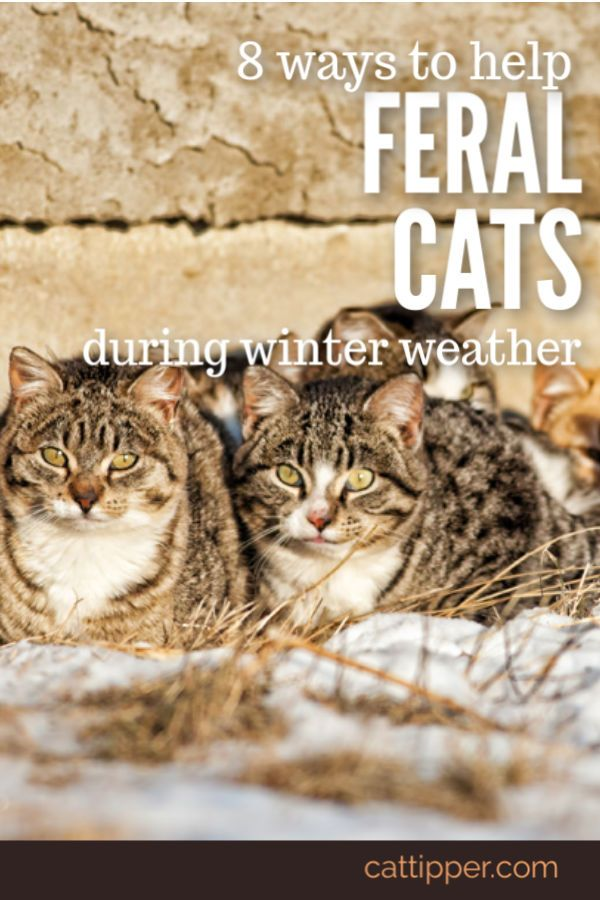 How To Help Feral Cats During Winter Weather Feral Cats Feral Cat Shelter Feral Cat House