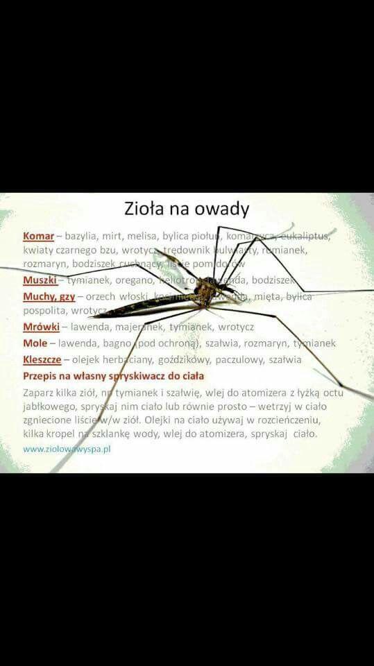 Zioła na owady