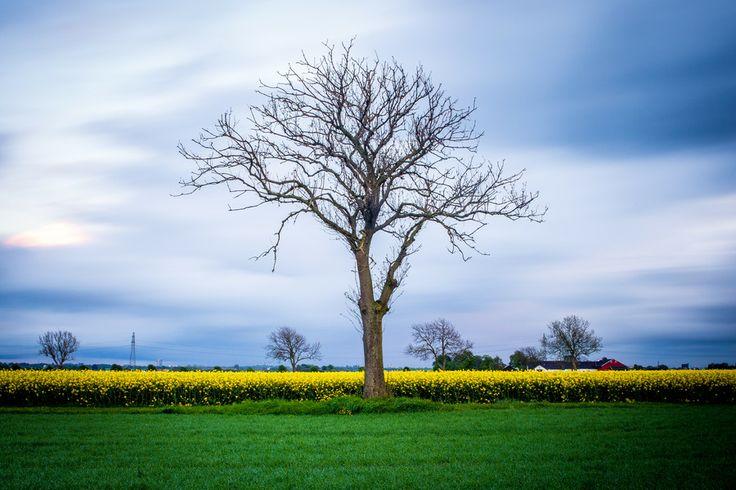 Lonely Tree by Mathias Stjernfelt on 500px