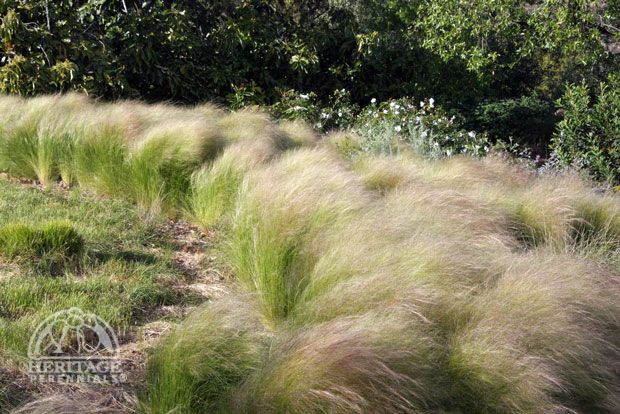 Ornamental grasses in garden google search urban oasis for Border grasses for landscaping