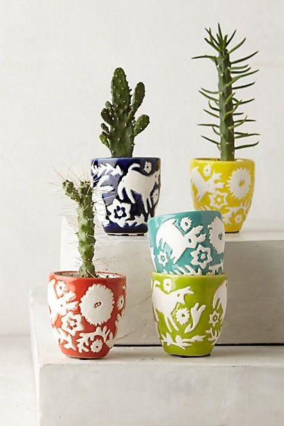 Colorful succulent pots