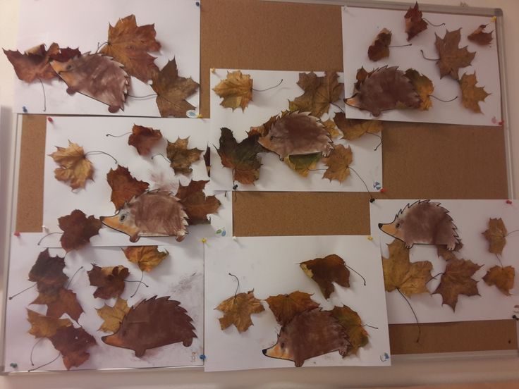 ježci v listí