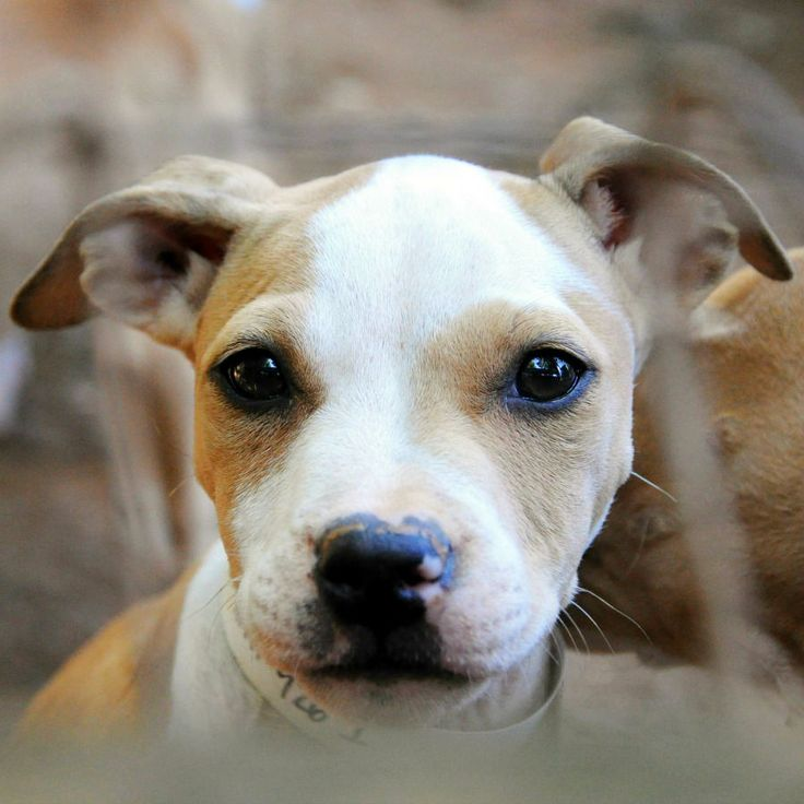 Speak up for dog fighting victims! The latest U.S. Farm Bill draft will make it a federal crime to be a spectator at an animal fight. We need your help to make this bill a reality. www.aspca.org/blog/fate-anti-animal-fighting-law-may-be-decided-week