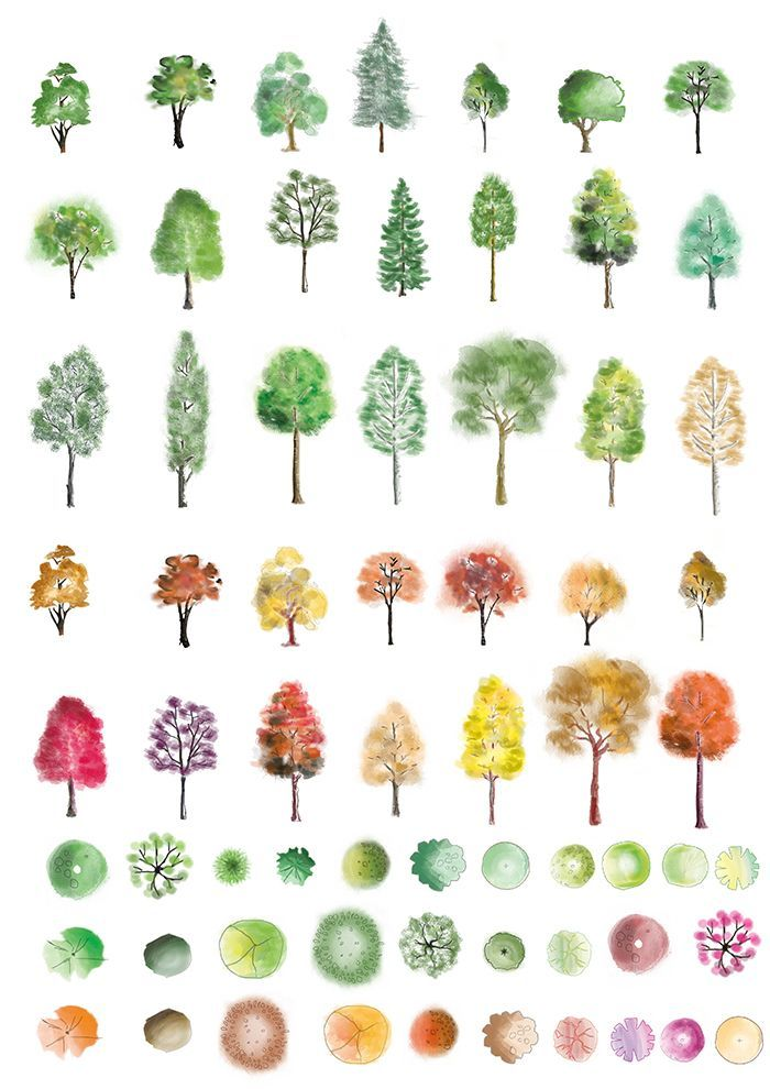 A huge selection of colour trees in photoshop, in different artistic styles - with both a summer and autumn feel.