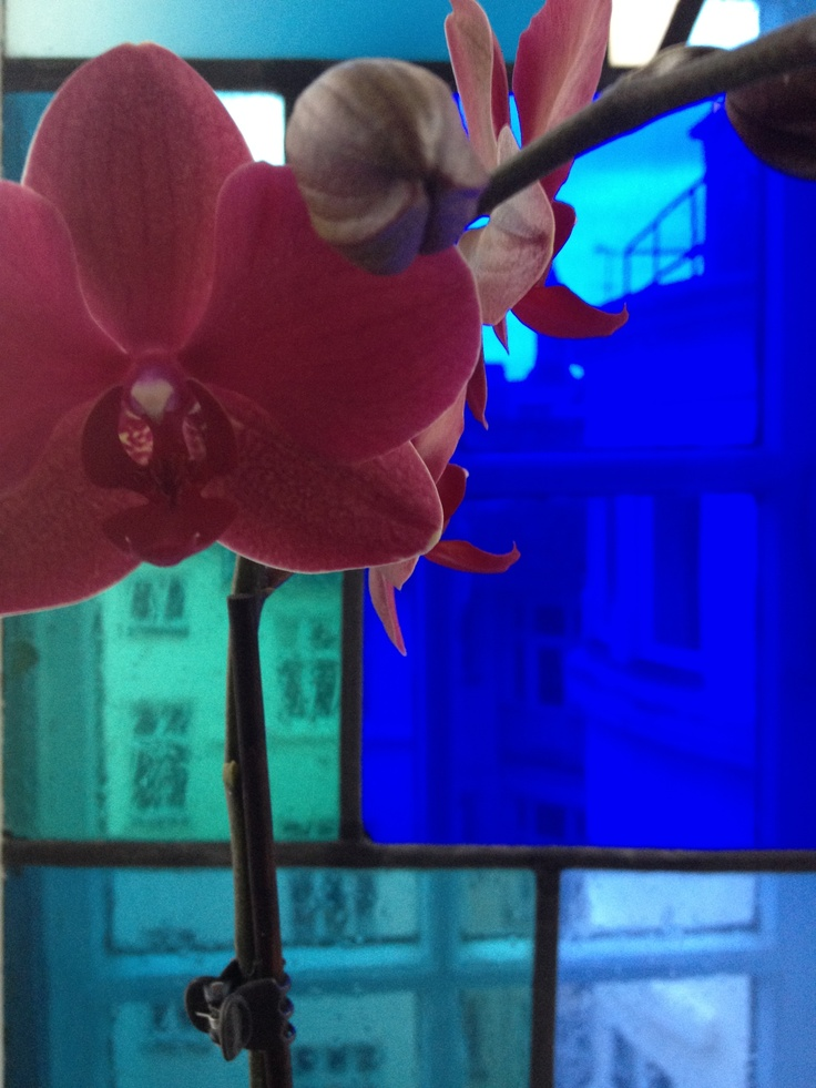 HAPPEL Photo Spread Flower #11