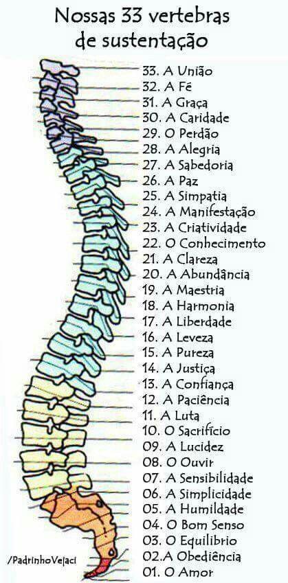 As vértebras e o conhecimento de si