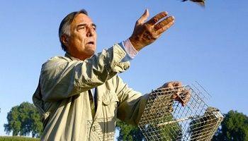 Animaux - Signez la pétition : #SlipGate Arrêtez la tuerie des pinsons dans les Landes !