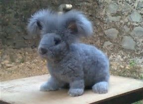 Image result for rabbit animal (mammal)
