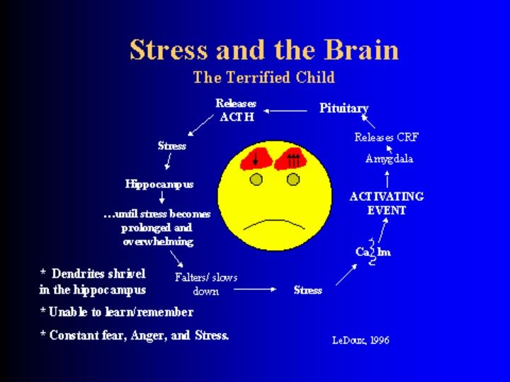 Brain development of a child constantly under stress...which leads to behavioral, psychosocial, & psychological issues.