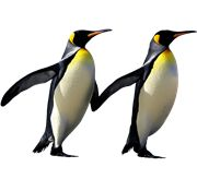 Penguins PNG Images On this site you can download free Penguins PNG image with transparent background.