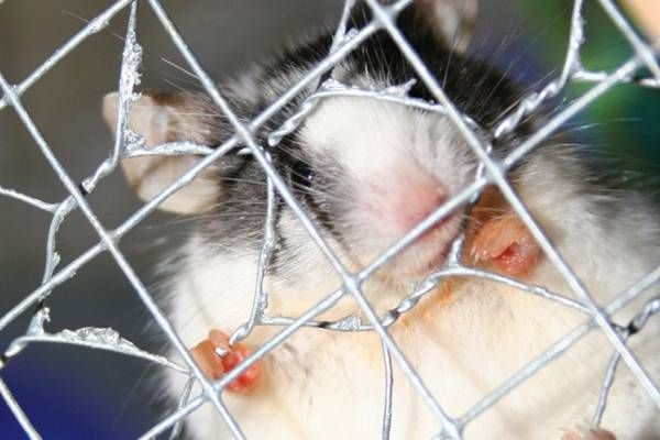 Top Cosmetic Companies Reportedly Resume Animal Testing Cosmetic - resume rabbit