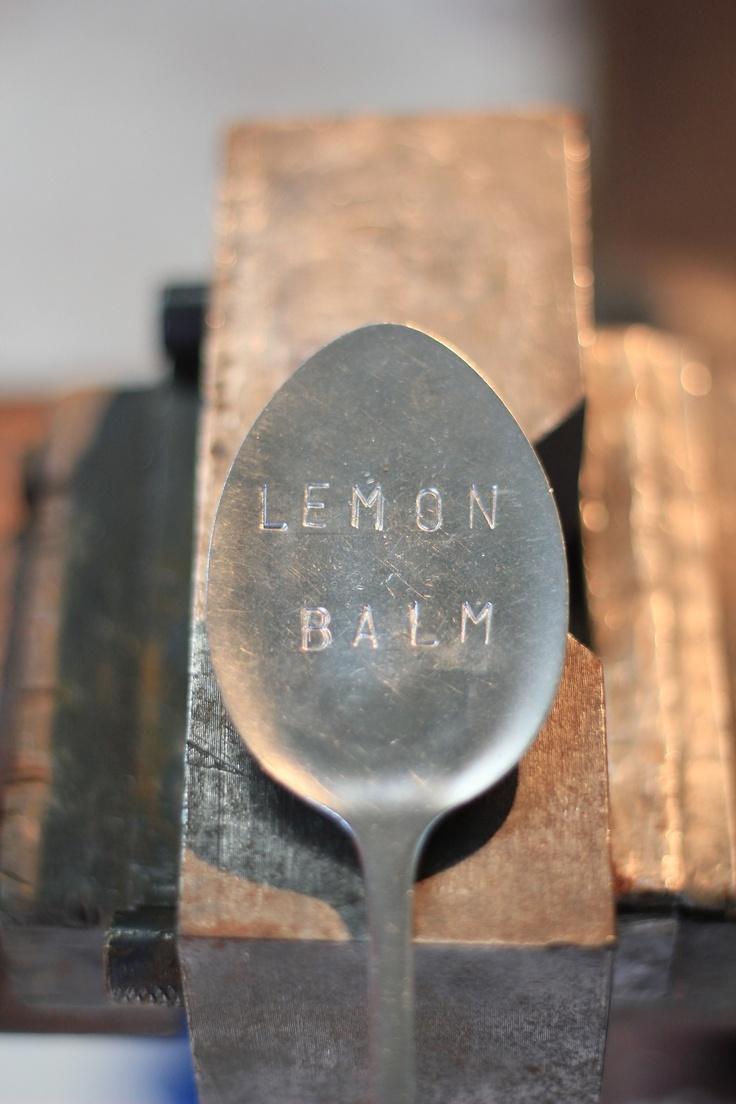 Lemon Balm, one of my favourite herbs.